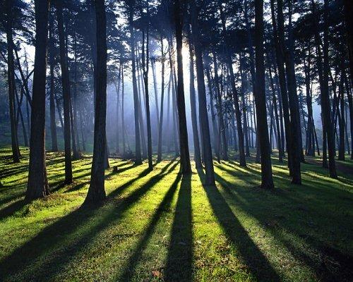 45 примеров использования тени в фотографии