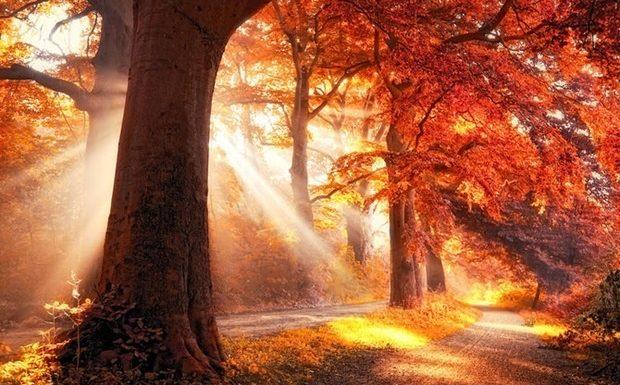Золотая осень. 117 фото и несколько простых советов