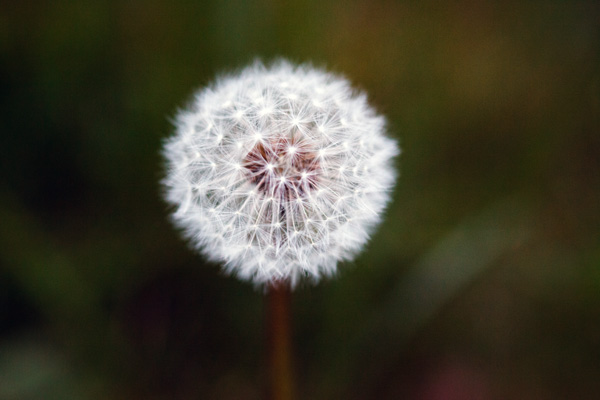 Как придать настроение снимку. 8 простых советов